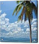 Exotic Palm Tree Acrylic Print