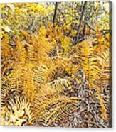 Exotic Plants Of The Dunes Acrylic Print