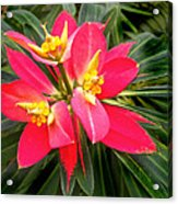 Exotic Red Flower Acrylic Print