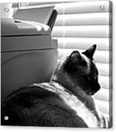 Expecting A Fax Acrylic Print
