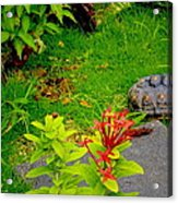 Exploration By A Red Footed Tortoise  Acrylic Print