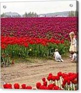 Exploring The Tulip Fields Acrylic Print