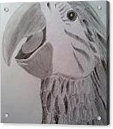 Expressive Parrot Acrylic Print