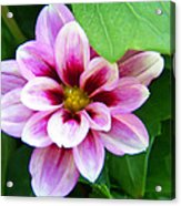 Exquisite Acrylic Print by Aimee L Maher Photography and Art Visit ALMGallerydotcom