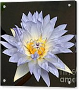Exquisite Lavender Waterlily Acrylic Print