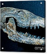 Extinct Gray Fox Acrylic Print