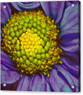 Extreme Flower Acrylic Print