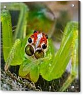Extreme Macro Of A Spiders Face Acrylic Print