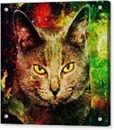 Eye Contact Acrylic Print by Anastasiya Malakhova