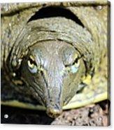 Eye Liner Turtle 8494 Acrylic Print