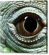 Eye Of A Common Iguana Iguana Iguana Acrylic Print