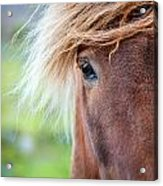 Eye Of A Pony Acrylic Print