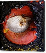 Eye Of Madrone Acrylic Print