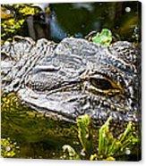 Eye Of The Alligator Acrylic Print