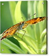 Eye Of The Butterfly Acrylic Print