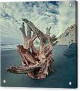 Eye Of The Driftwood Acrylic Print