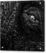 Eye Of The Elephant Acrylic Print