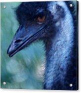 Eye Of The Emu Acrylic Print by DerekTXFactor Creative