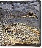 Eye Of The Gator Acrylic Print by Adam Jewell