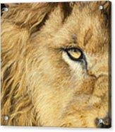 Eye Of The Lion Acrylic Print