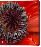Eye Of The Poppy Acrylic Print
