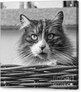 Eyecat Acrylic Print