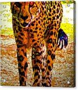 Eye Of The Huntress Acrylic Print