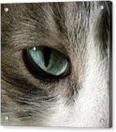 Eyes 3 Acrylic Print
