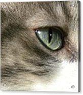 Eyes 4 Acrylic Print