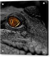 Eyes For You Acrylic Print