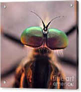 Eyes Of The Robber Fly Acrylic Print
