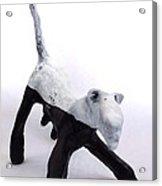 Fabulas Canis Black And White Female  Acrylic Print by Mark M  Mellon