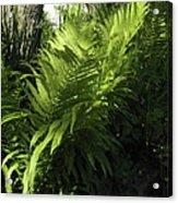 Fabulous Ferns  Acrylic Print