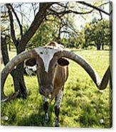 Fabulous Texas Longhorn Acrylic Print