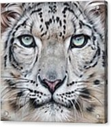 Faces Of The Wild - Snow Leopard Acrylic Print
