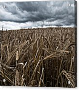 Facing The Storm Color Acrylic Print