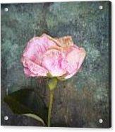 Faded Beauty Acrylic Print