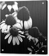 Faded Memory Acrylic Print