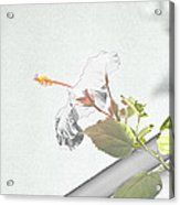 Fading Flower Acrylic Print
