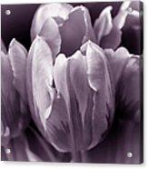 Fading Tulip Flowers Lavender Gray Monochrome Acrylic Print