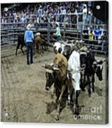 Fair Rodeo Acrylic Print
