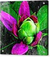 Fairy Bloom  Acrylic Print by Natalya Karavay