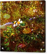 Fairy Land Acrylic Print