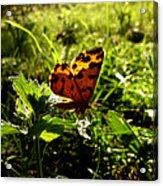 Fairy Acrylic Print by Lucy D