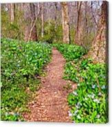 Fairy Paths Acrylic Print