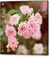Fairy Roses Acrylic Print