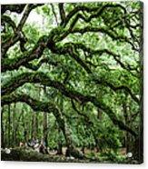 Fairy Tale Branches Acrylic Print