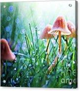 Fairytopia Acrylic Print by Sylvia Cook