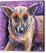Faithful Friend Acrylic Print