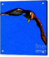 Falcon In Blue Acrylic Print
